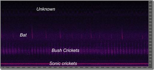 Happy Valley ultrasonics