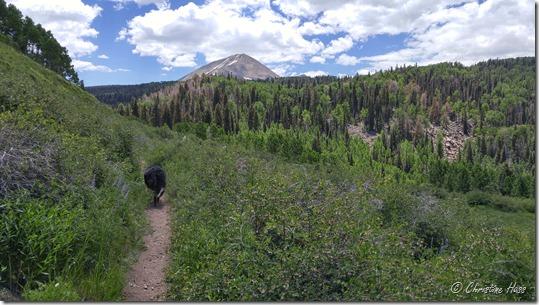 Hiking trail in the La Sal Mountains, Utah